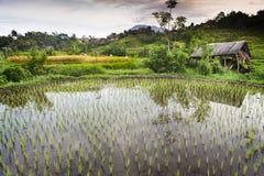 Risaie di Bali. Immagine Stock Libera da Diritti