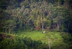 Risaie di Bali. Fotografia Stock Libera da Diritti