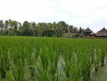 Risaie di balinese, tempio nella distanza Immagini Stock Libere da Diritti