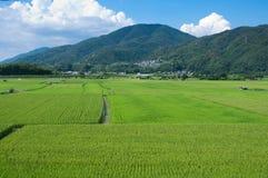Risaie di riso Fotografia Stock