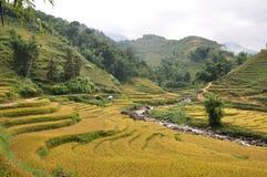 Risaie di riso Fotografie Stock Libere da Diritti