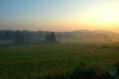Risaie di riso fotografia stock libera da diritti