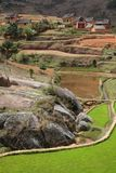 Risaie di riso dell'altopiano del Madagascar Immagini Stock
