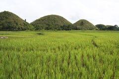 Risaie di riso delle colline del cioccolato di Bohol Filippine Fotografie Stock Libere da Diritti