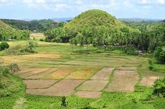 Risaie di riso nei tropici Immagini Stock
