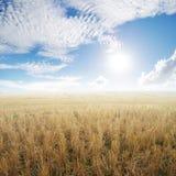 Risaie dopo il fondo del cielo di Sun e del raccolto Fotografie Stock Libere da Diritti