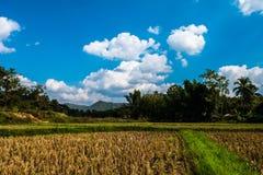 Risaie dopo le nuvole ed il cielo della montagna del raccolto Fotografia Stock Libera da Diritti
