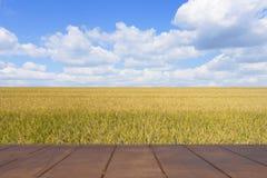 Risaie dorate della molla e del pavimento di legno Immagine Stock Libera da Diritti