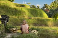 Risaie e agricoltori Ubud, Bali, Indonesia Fotografie Stock