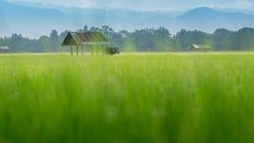 Risaie e capanna asiatiche dell'agricoltore nella stagione delle pioggie, coltivazione nel paese della Tailandia Fotografie Stock Libere da Diritti