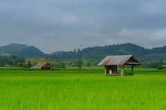 Risaie e capanna asiatiche dell'agricoltore nella stagione delle pioggie, coltivazione nel paese della Tailandia Fotografia Stock Libera da Diritti
