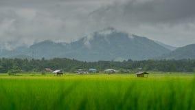 Risaie e capanna asiatiche dell'agricoltore nella stagione delle pioggie, coltivazione nel paese della Tailandia Fotografie Stock