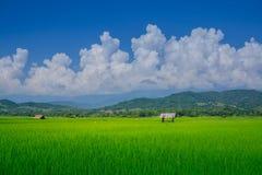Risaie e capanna asiatiche dell'agricoltore nella stagione delle pioggie, coltivazione nel paese della Tailandia Terra dell'azien Fotografia Stock