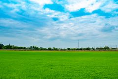 Risaie e cielo verdi Fotografie Stock Libere da Diritti