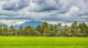 Risaie e montagna nuvolosa Fotografia Stock