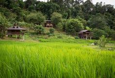 Risaie e natura a Mae Klang Luang, Doi Inthanon, Chiang Mai, Tailandia fotografia stock libera da diritti