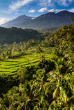 Risaie ed alberi con il Mt Rinjani-Lombok, Asia Fotografie Stock Libere da Diritti