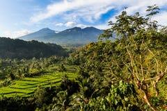 Risaie ed alberi con il Mt Rinjani-Lombok, Asia Fotografia Stock Libera da Diritti