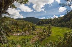 Risaie in montagne, Flores, Indonesia Immagini Stock Libere da Diritti
