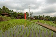 Risaie in Munduk in Bali fotografia stock