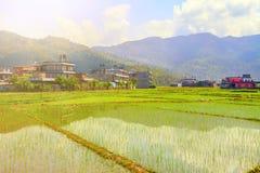 Risaie nel Nepal Immagine Stock