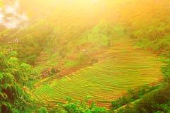 Risaie nel Nepal Fotografia Stock Libera da Diritti