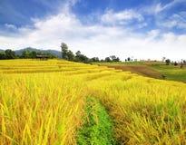 Risaie nel Nord della Tailandia Fotografia Stock Libera da Diritti