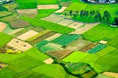 Risaie nel nord-ovest del Vietnam Immagine Stock Libera da Diritti