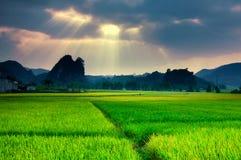 Risaie nel nord-ovest del Vietnam Fotografia Stock