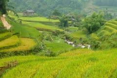 Risaie nella regione montana di Sapa, Vietnam immagine stock libera da diritti