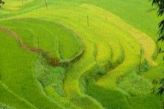 Risaie nella regione montana di Sapa, Vietnam fotografia stock