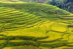 Risaie nella regione montana di Sapa, Vietnam immagini stock libere da diritti