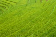 Risaie nella regione montana di Sapa, Vietnam fotografie stock libere da diritti