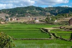Risaie nelle colline del Madagascar centrale Immagine Stock