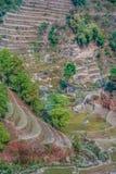 Risaie nepalesi Fotografie Stock