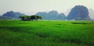 Risaie prima della pagoda del profumo a Hanoi Fotografia Stock