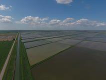 Risaie sommerse Metodi agronomici di coltivare riso nei campi Fotografia Stock