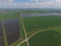 Risaie sommerse Metodi agronomici di coltivare riso nei campi Immagini Stock