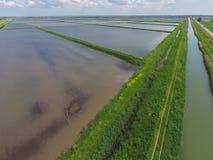 Risaie sommerse Metodi agronomici di coltivare riso nella f Fotografia Stock