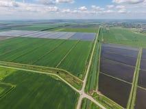 Risaie sommerse Metodi agronomici di coltivare riso nella f Fotografia Stock Libera da Diritti