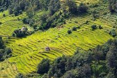 Risaie spettacolari sui pendii himalayani, Nepal Fotografie Stock