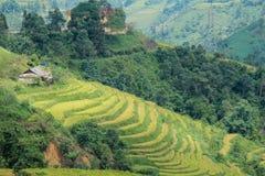 Risaie su a terrazze di Sapa Vietnam Fotografia Stock Libera da Diritti