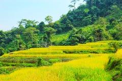 Risaie su a terrazze I campi sono preparati per la piantatura del riso Hoang Su Phi, provincia di Ha Giang Il Vietnam del Nord fotografia stock libera da diritti