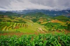 Risaie sul terrazzo nella stagione delle pioggie alla MU Cang Chai, Yen Bai, Vietnam Fotografia Stock