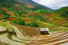 Risaie sul terrazzo nella stagione delle pioggie alla MU Cang Chai, Yen Bai, Vietnam Fotografie Stock