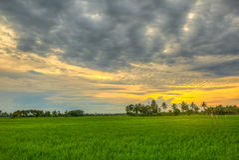 Risaie sul tramonto Fotografie Stock Libere da Diritti