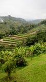 Risaie a terrazze del riso in Bali centrale, Indonesia Fotografie Stock Libere da Diritti