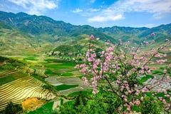Risaie a terrazze nel Vietnam immagini stock
