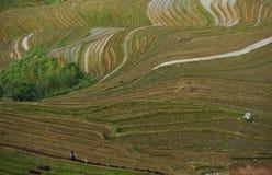 Risaie a terrazze, nel villaggio di Dazhai, il Guangxi, Cina Immagini Stock Libere da Diritti