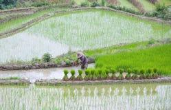 Risaie a terrazze nella contea di Yuanyang, il Yunnan, Cina Fotografie Stock Libere da Diritti